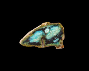 Petrefied Wood Opalized, slice of a branch